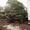 Umpflanzung Privatgarten